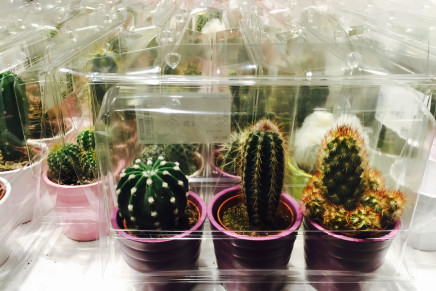 Being a cactus in the Anthropocene